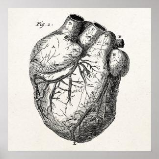 Corazones cardiacos retros de la anatomía del cora póster