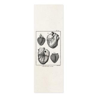 Corazones cardiacos retros de la anatomía del cora tarjetas de visita mini