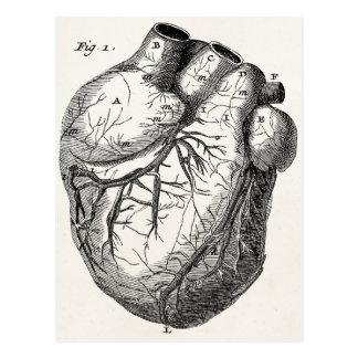 Corazones cardiacos retros de la anatomía del cora postales