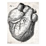 Corazones cardiacos retros de la anatomía del cora postal