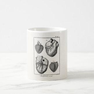 Corazones cardiacos retros de la anatomía del cora taza de café