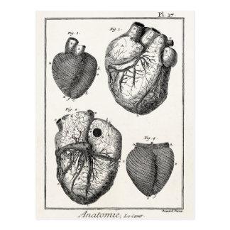 Corazones cardiacos retros de la anatomía del tarjeta postal
