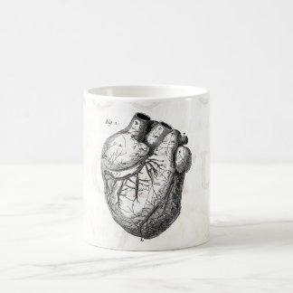 Corazones cardiacos retros de la anatomía del taza de café