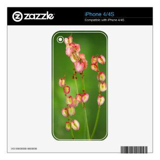 Corazones de papel (Rumex Woodii), Ukhahlamba iPhone 4S Skin