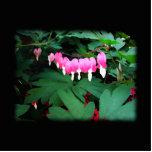 Corazones sangrantes. Flores rosadas Esculturas Fotograficas