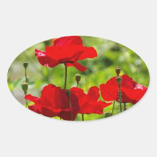 corb poppy oval sticker