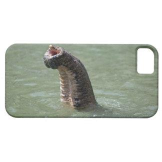 Corbett National Park, Uttaranchal, India iPhone SE/5/5s Case