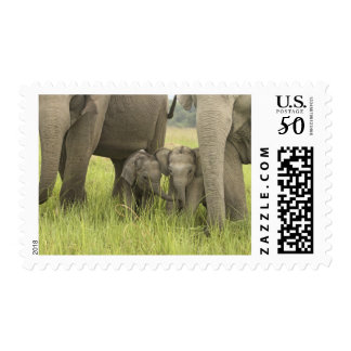 Corbett National Park, Uttaranchal, India. Postage
