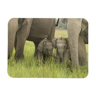 Corbett National Park, Uttaranchal, India. Magnets