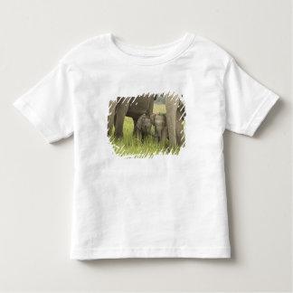 Corbett National Park, Uttaranchal, India. Shirt