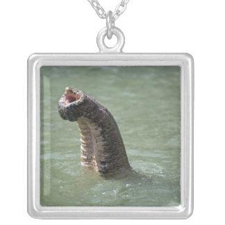 Corbett National Park, Uttaranchal, India Silver Plated Necklace