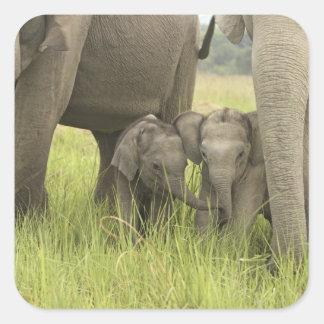 Corbett National Park Uttaranchal India Stickers