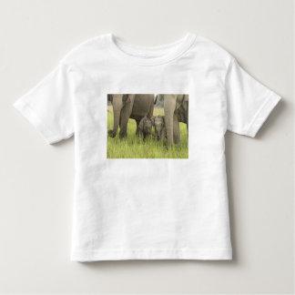 Corbett National Park, Uttaranchal, India. Toddler T-shirt