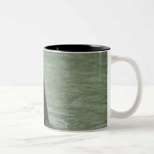 Corbett National Park, Uttaranchal, India Two-Tone Coffee Mug