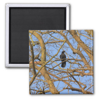 corbie in a tree 2 inch square magnet