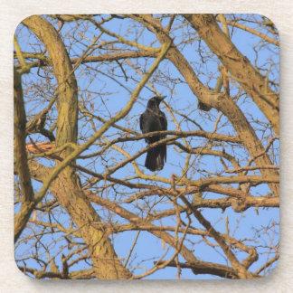 corbie in a tree coaster