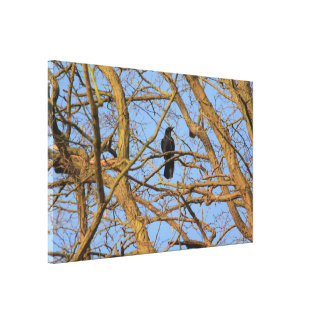 corbie in a tree stretched canvas prints