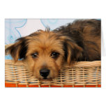 Cordell - Chorkie Greeting Cards