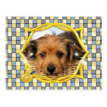 Cordell_Chorkie_Shelly-3a Postcards