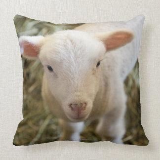 Cordero del bebé almohada