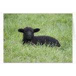 Cordero negro de la primavera felicitaciones