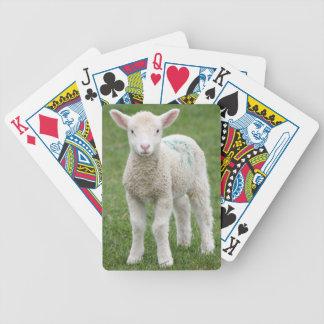 Corderos de la primavera barajas de cartas
