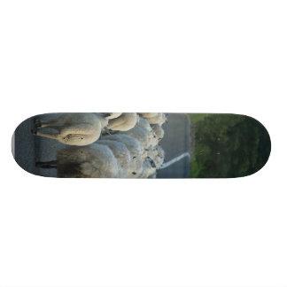 Corderos de los caminos de las ovejas skateboard