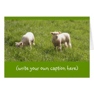 Corderos que pastan tarjeta
