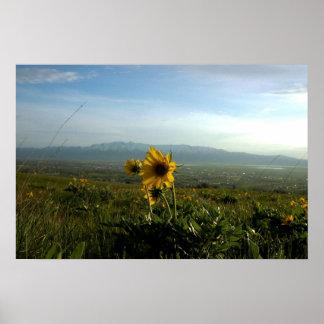 Cordillera de la flor y de Wellsville Póster