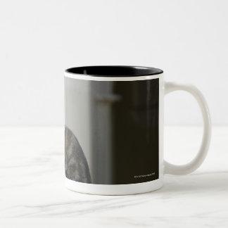 cordoba, argentina Two-Tone coffee mug