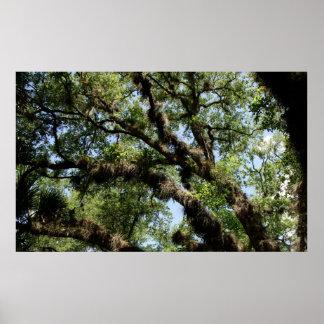 Cordón del árbol póster