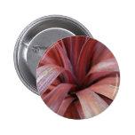 Cordyline púrpura/rojo pins