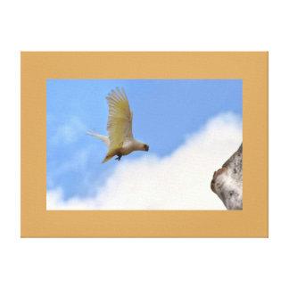 CORELLA BIRD QUEENSLAND AUSTRALIA CANVAS PRINT
