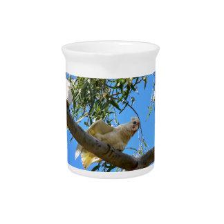 CORELLA BIRD QUEENSLAND AUSTRALIA DRINK PITCHER