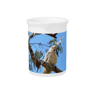 CORELLA BIRD QUEENSLAND AUSTRALIA DRINK PITCHERS