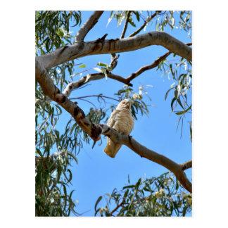 CORELLA BIRD QUEENSLAND AUSTRALIA POSTCARD