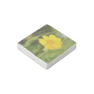 Coreopsis floreciente imán de piedra