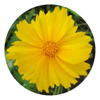 Coreopsis Yellow Flower Bloom Card