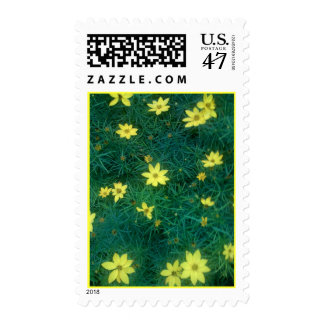 Coreopsis Yellow Flower Postage Stamp