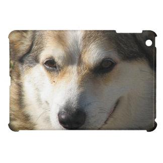 corgi-13 iPad mini cover
