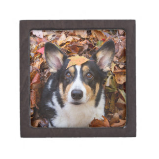 Corgi and Fall Leaves Gift Box