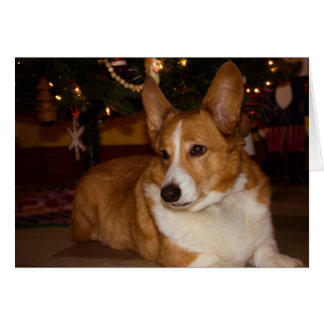 Corgi Christmas Card