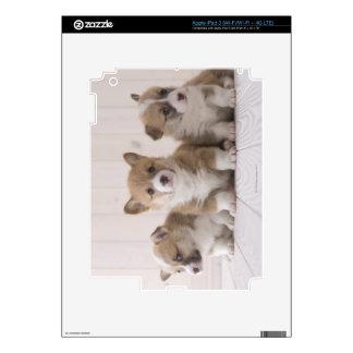 Corgi de tres Galés iPad 3 Pegatinas Skins