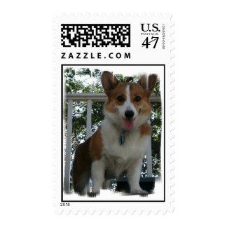 Corgi Dog Postage Stamp