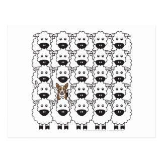 Corgi en las ovejas tarjeta postal