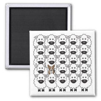Corgi in the Sheep 2 Inch Square Magnet