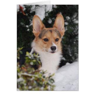 Corgi in the Snow Card