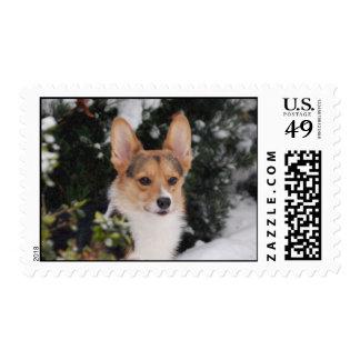 Corgi in the Snow Stamp
