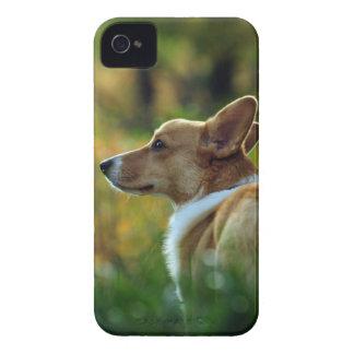 Corgi iPhone Case iPhone 4 Covers