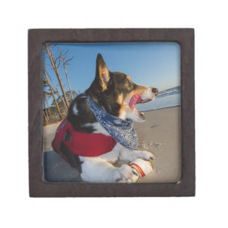 Corgi Licking his Chops Jewelry Box